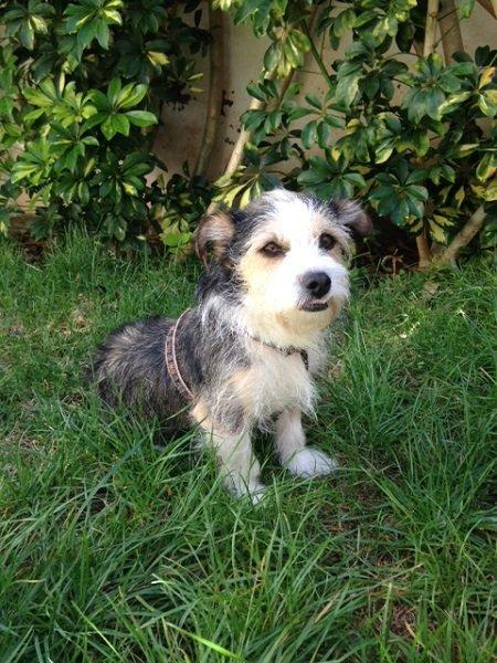 Beno / Terrier-Mischling