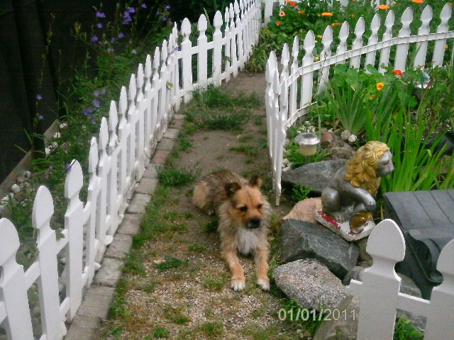 Hardy / Terrier-Mix