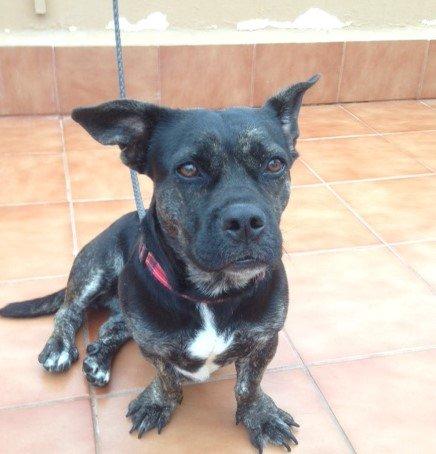 Layka sucht Sofaplatz zum Schmusen